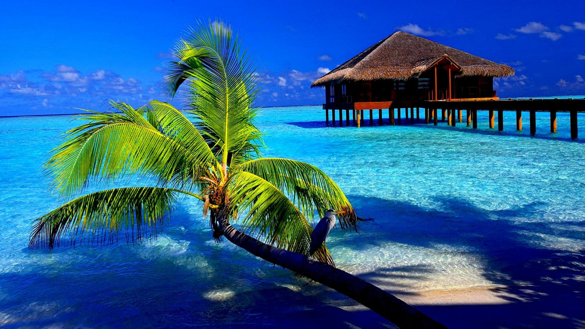 Tropical Beach Screensavers And Wallpaper: Tropical Screensavers And Wallpaper (50+ Images