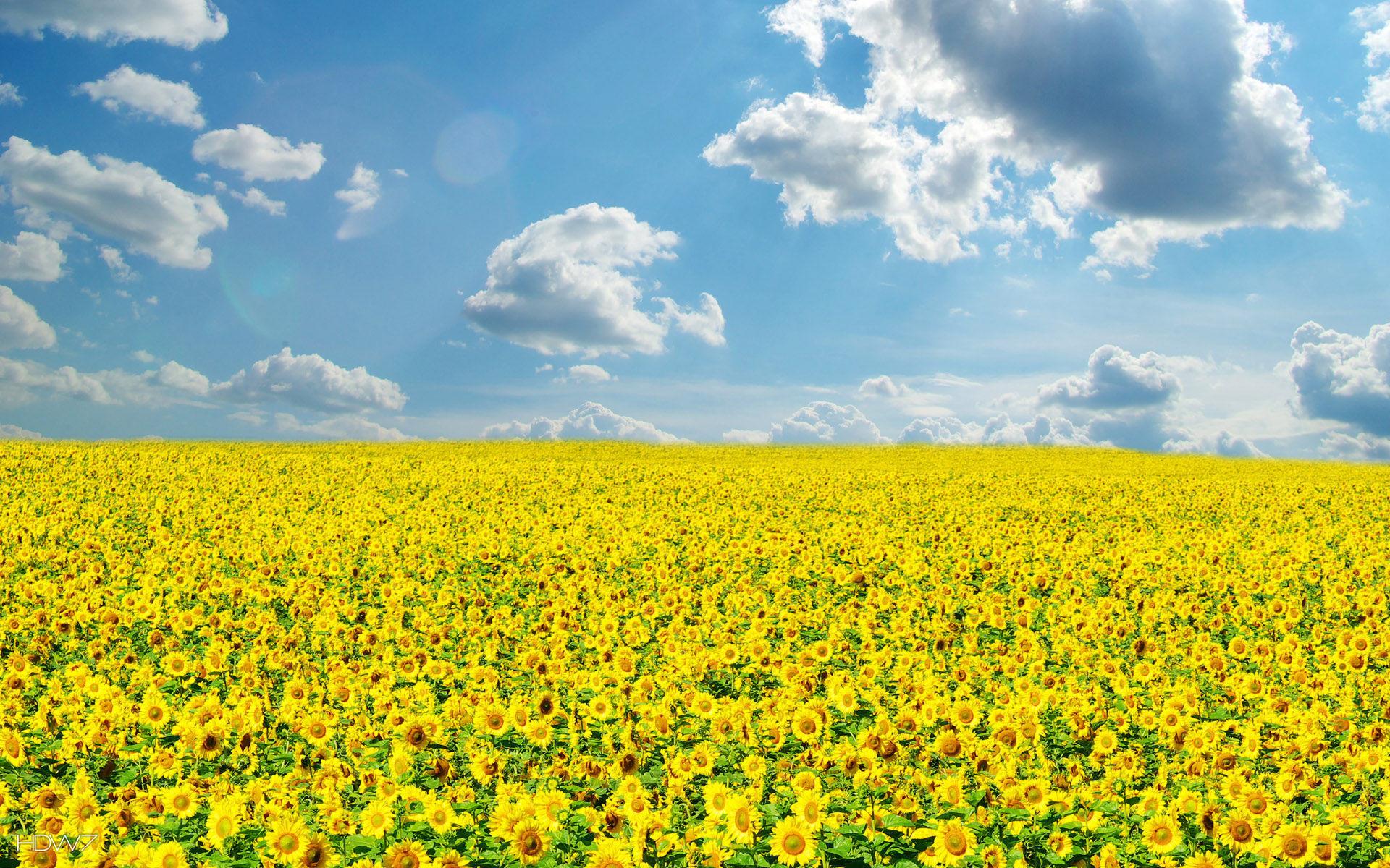 Sunny Day Wallpaper (5...
