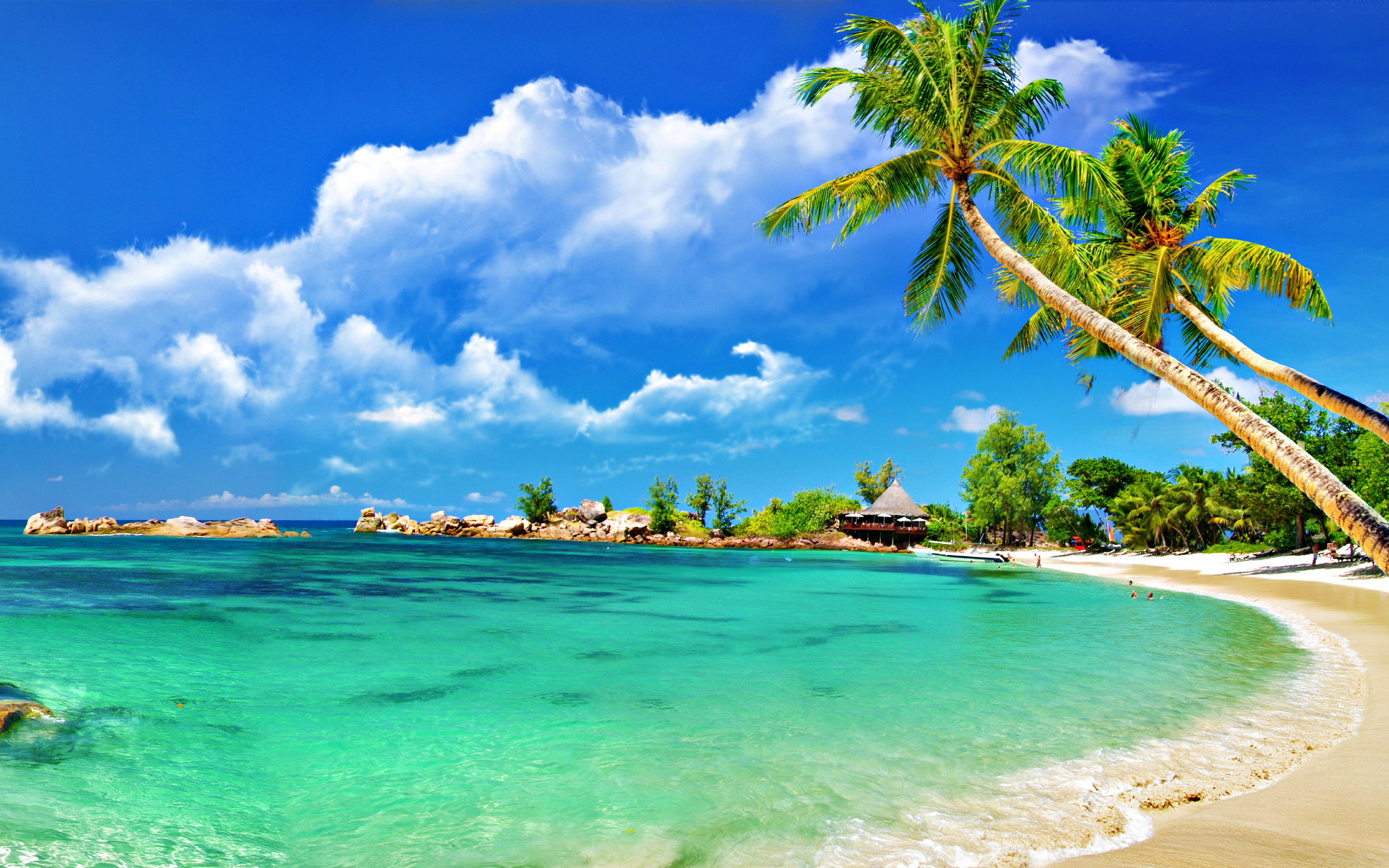 2560x1600 Trees on sandy beach | Sky HD Wallpaper - bathroom shop