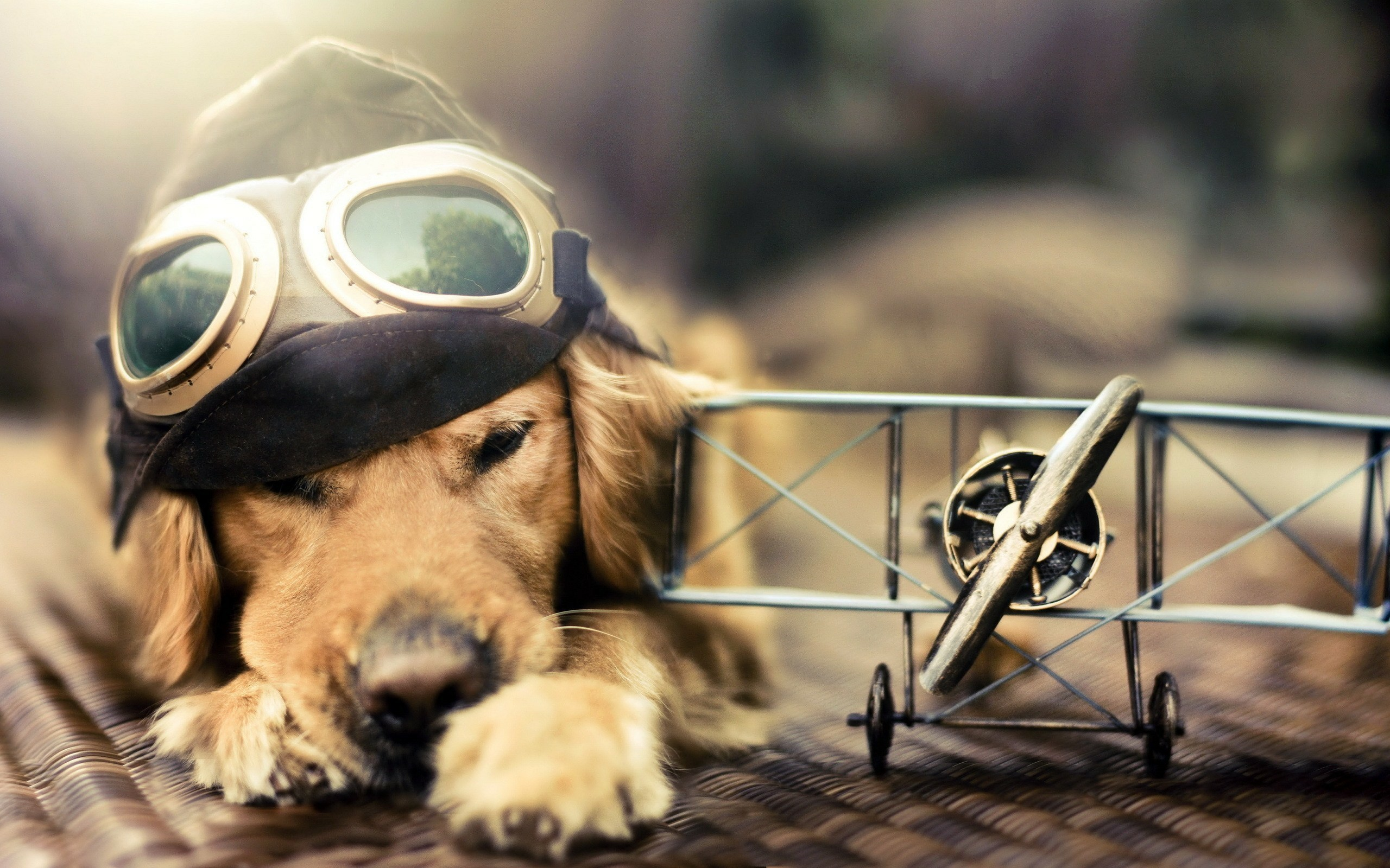 2560x1600 Free 3d mood old plane dog hd wallpapers download