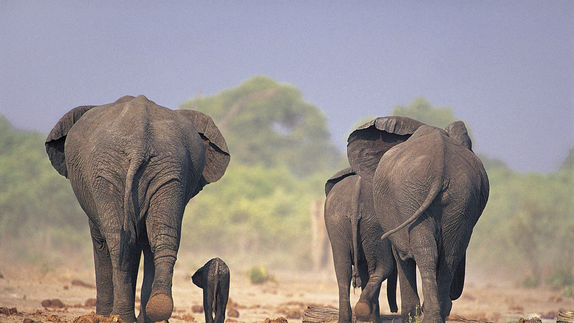 Elephant Wallpaper (73+ Images
