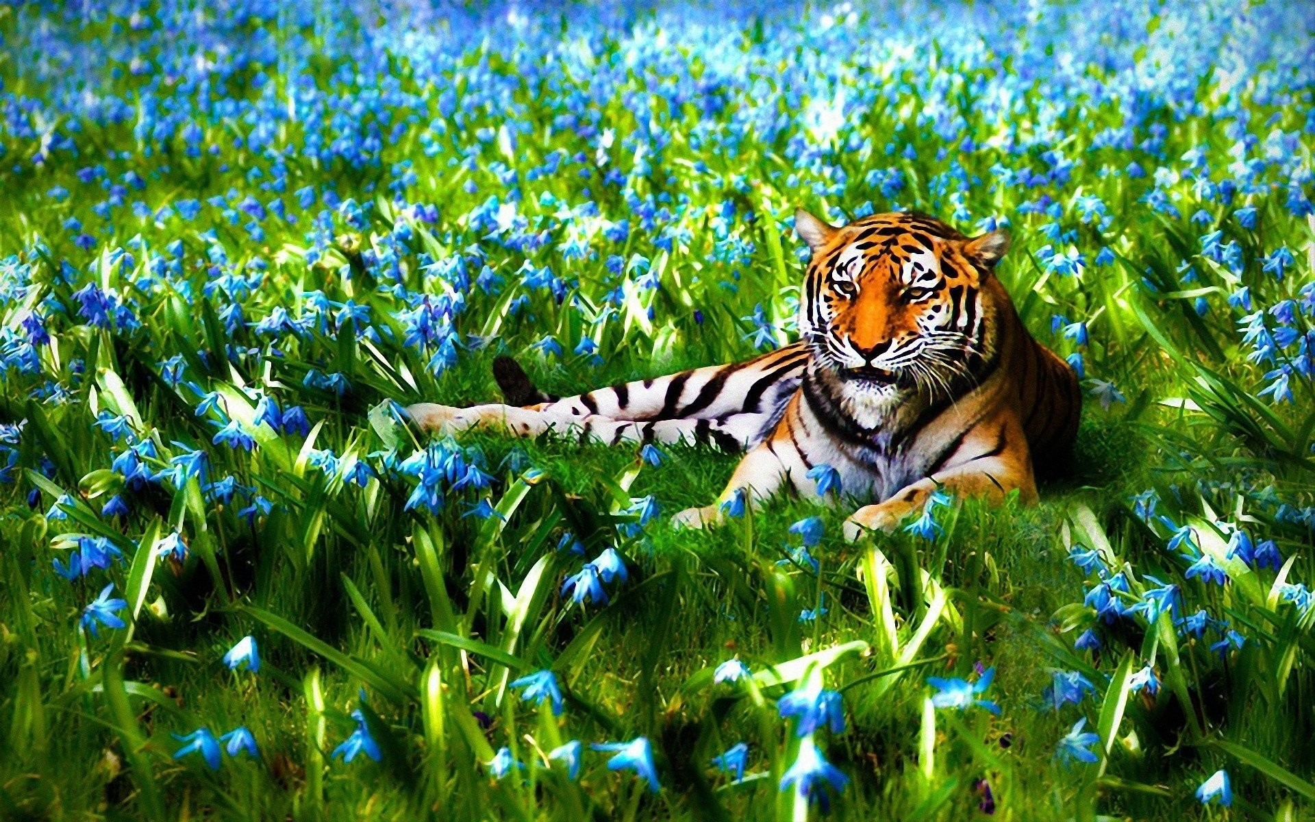1920x1200 Beautiful Nature Wallpaper Hd 3d Cool Cute Animal By Md