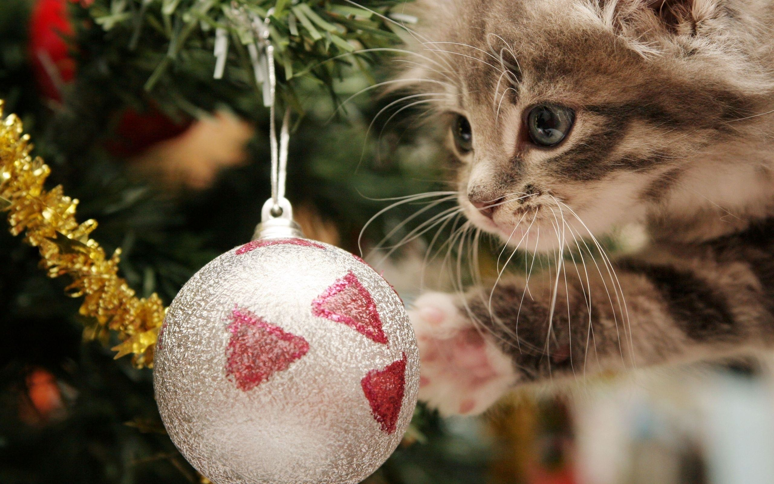 Christmas Wallpaper with Cats (55+ images)