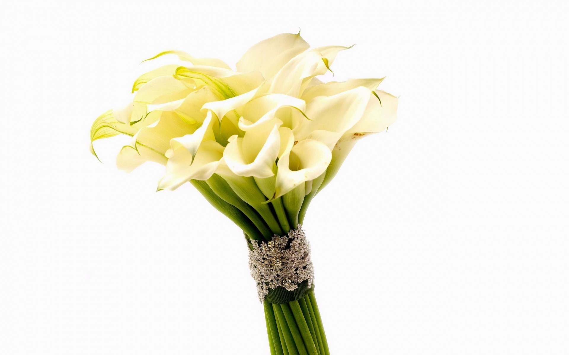 1920x1200 Calla Lily Bouquet wallpapers and stock photos