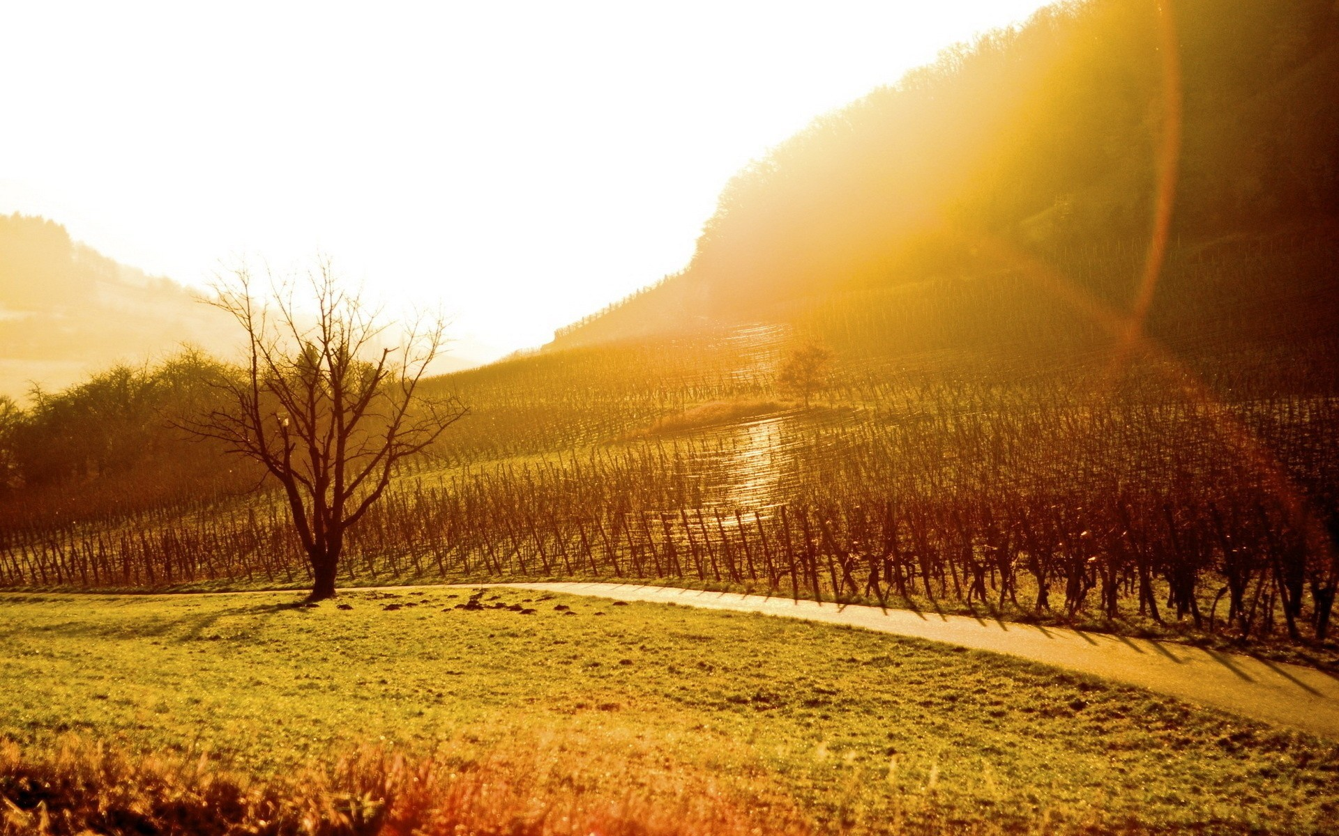 1920x1200 Best Sunshine on Vineyard Wallpaper Wallpaper