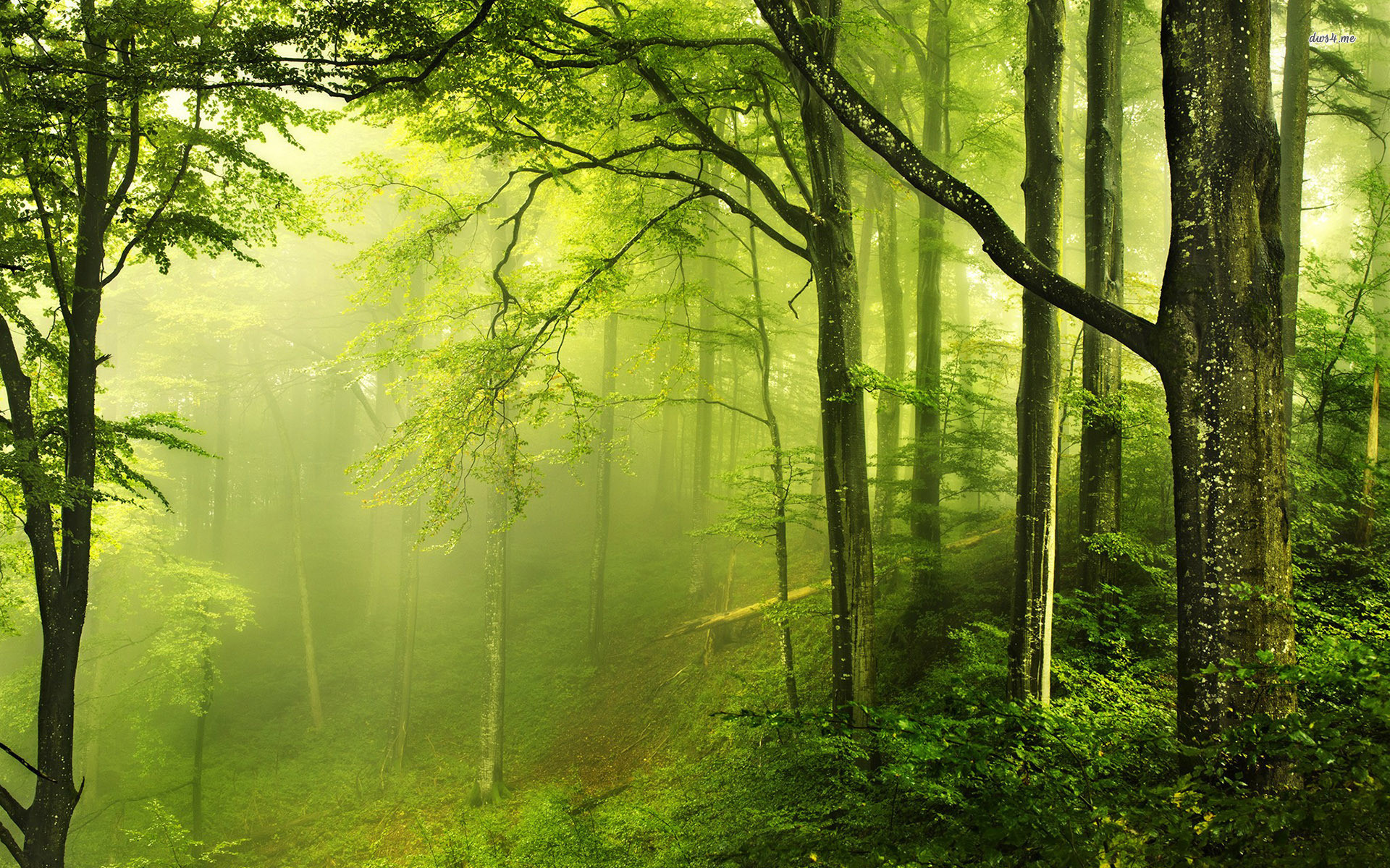 1920x1200 Beautiful Green Forest Nature Wallpaper Deskto #5336 Wallpaper .