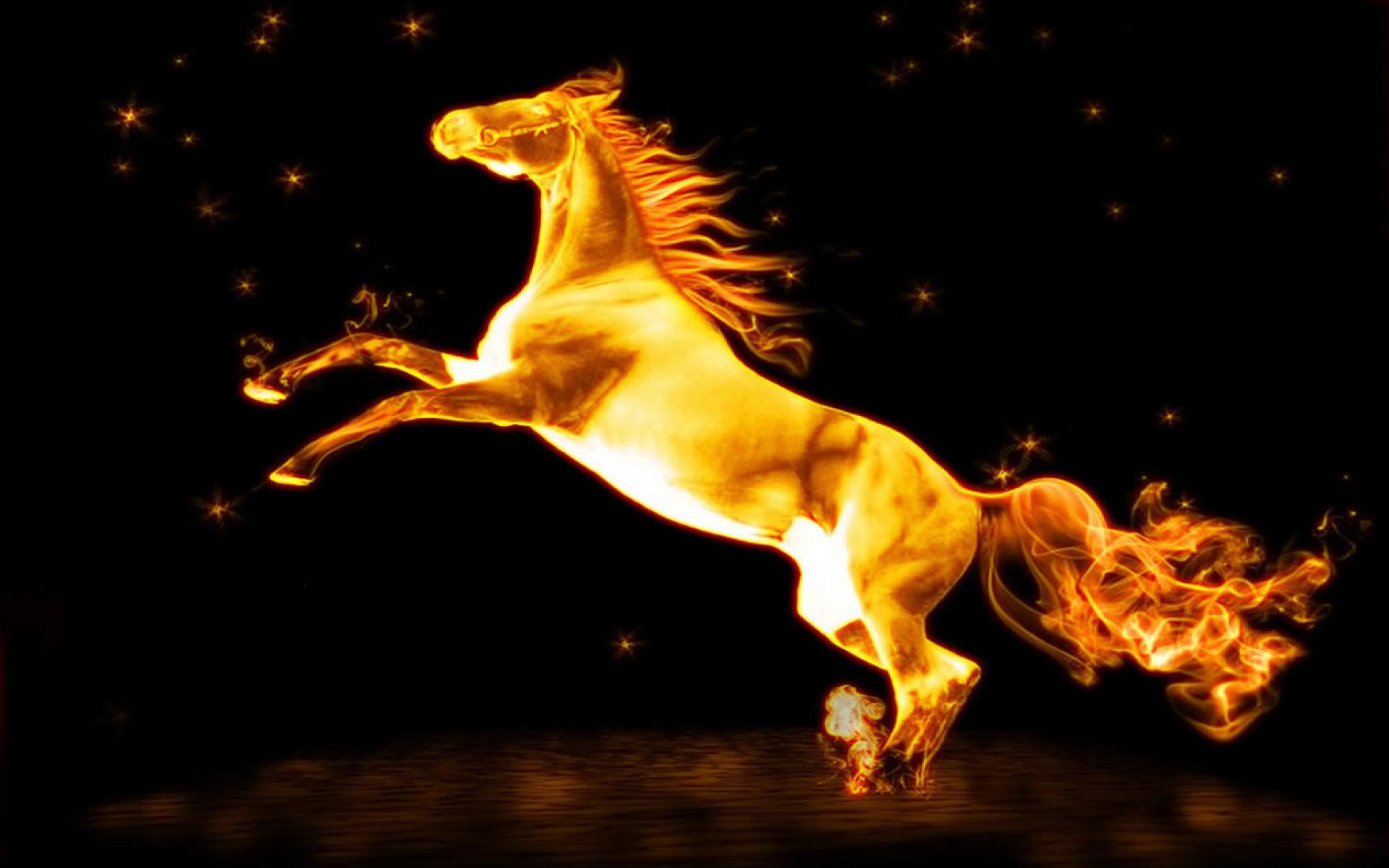 Fire Horse Wallpaper Hd 61 Images