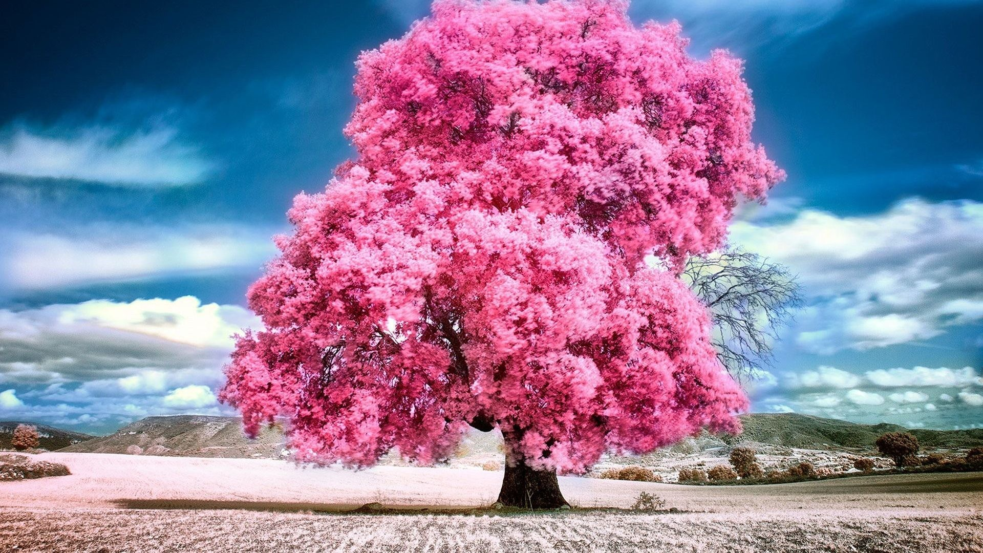 Pink Nature Wallpaper (53+ images) - photo#42