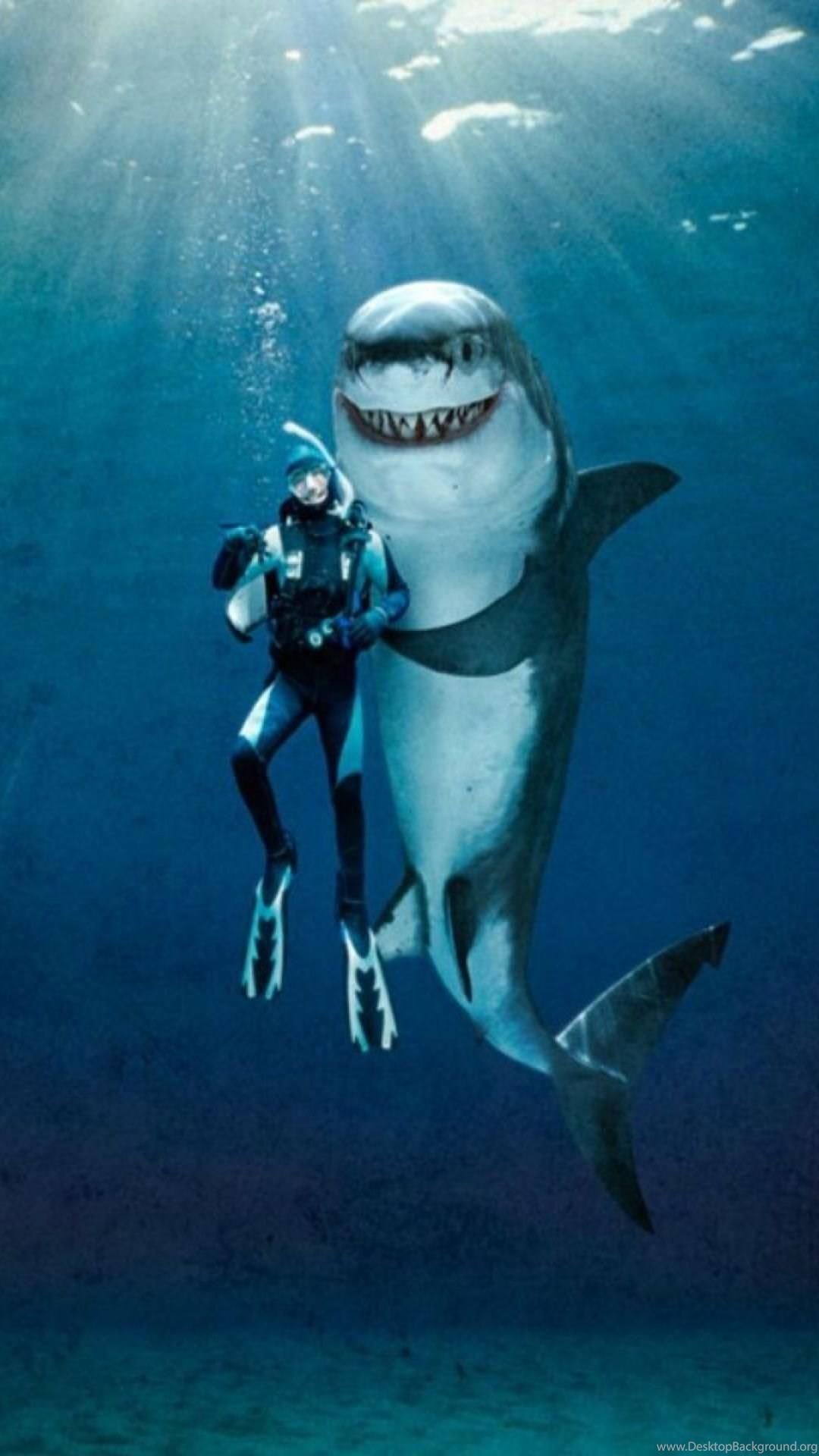 Great White Shark Wallpaper 70 Images