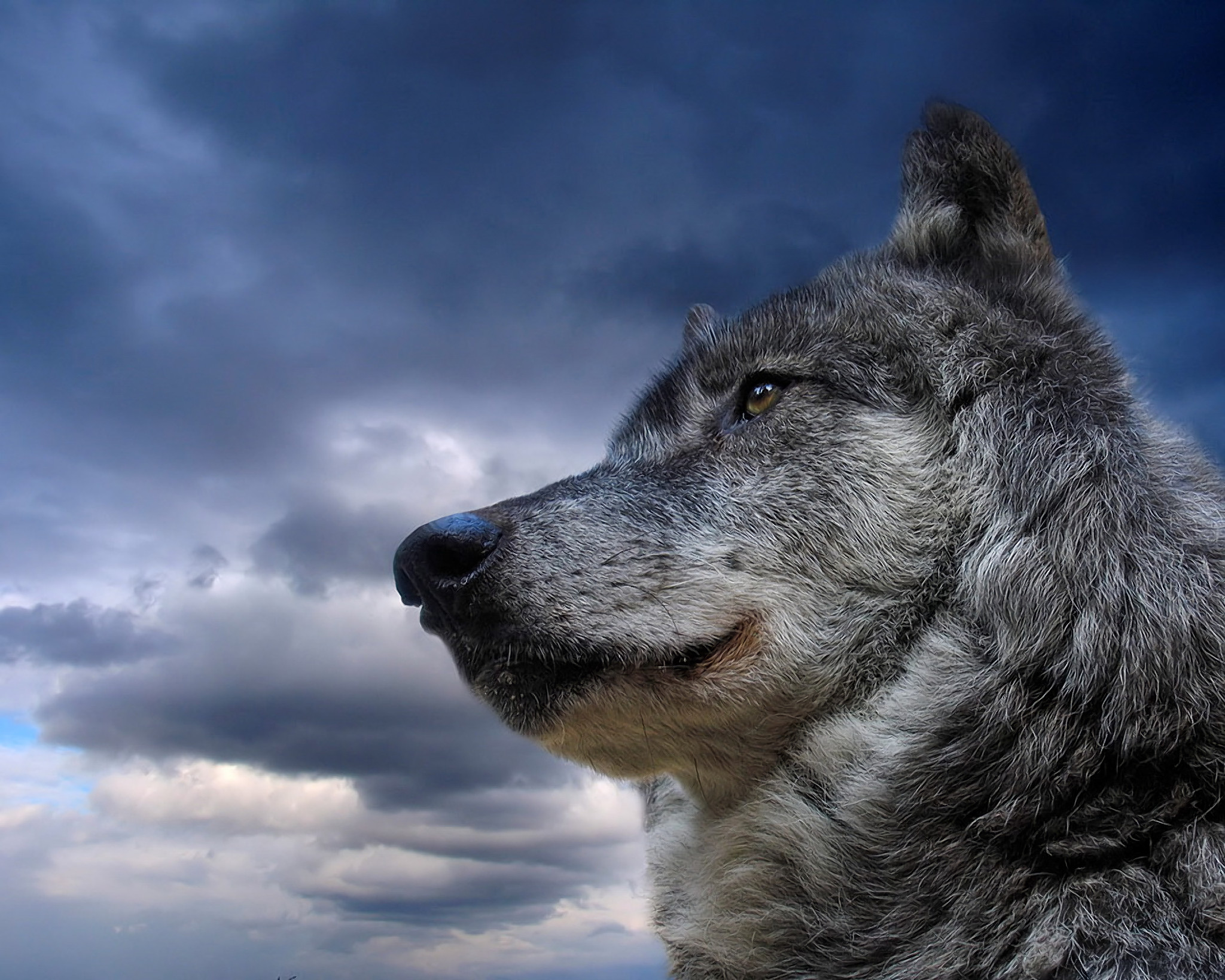 2048x1639 wolf computer wallpapers desktop backgrounds x id | hd wallpapers