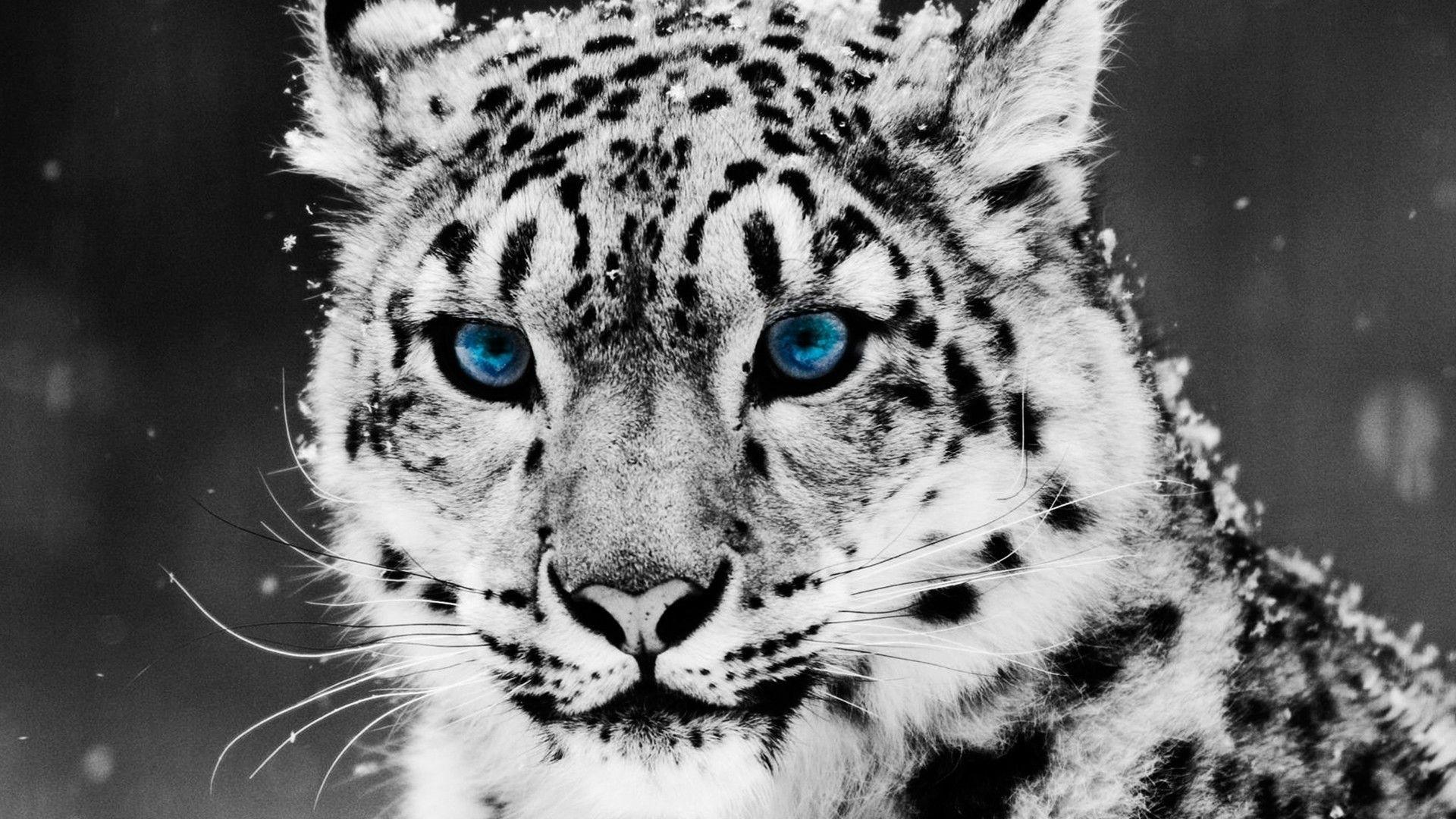 1920x1200 Free U003cbu003eWhite Tiger Wallpaperu003c/bu003e
