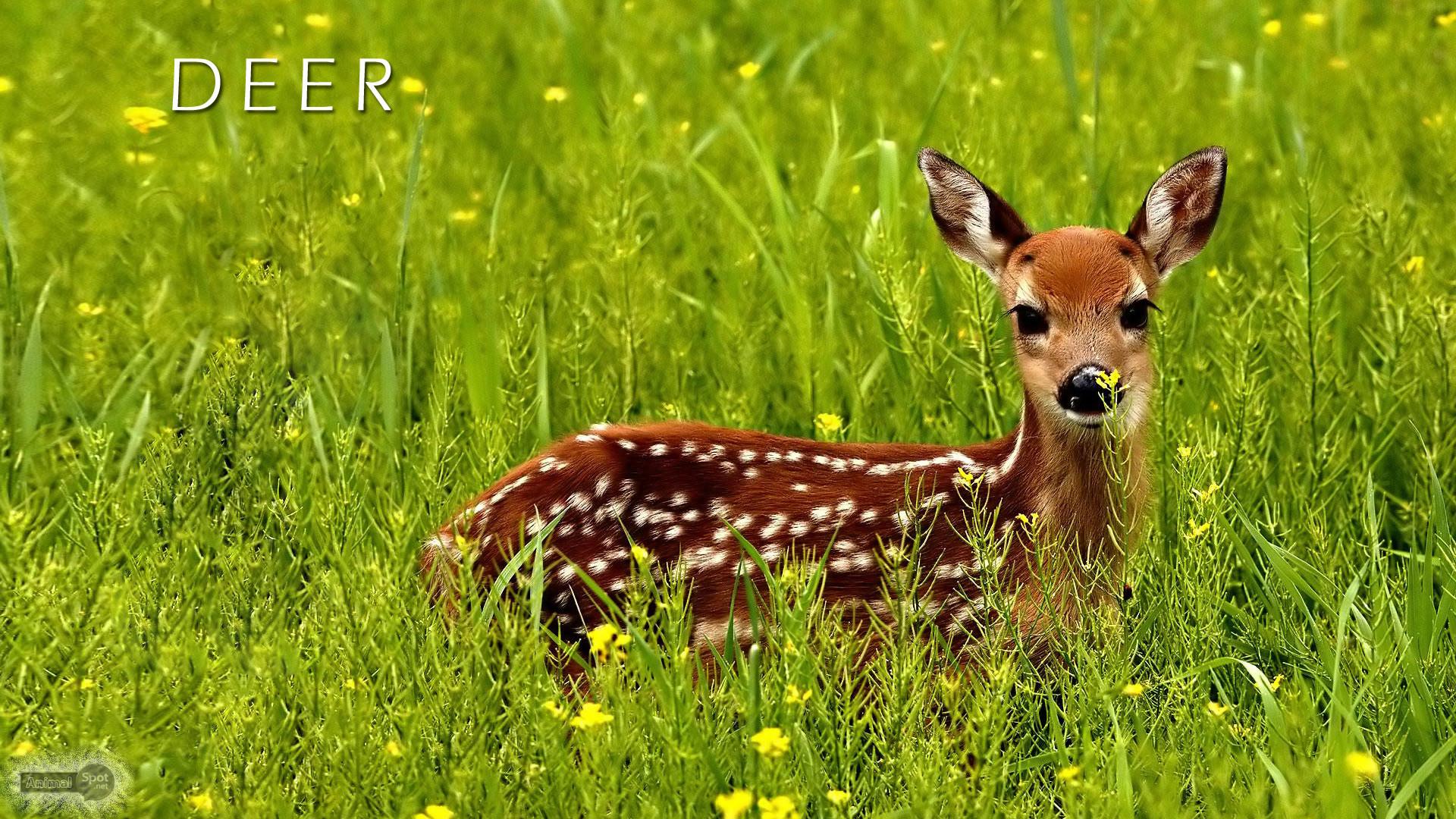 Deer Desktop Backgrounds (59+ images)