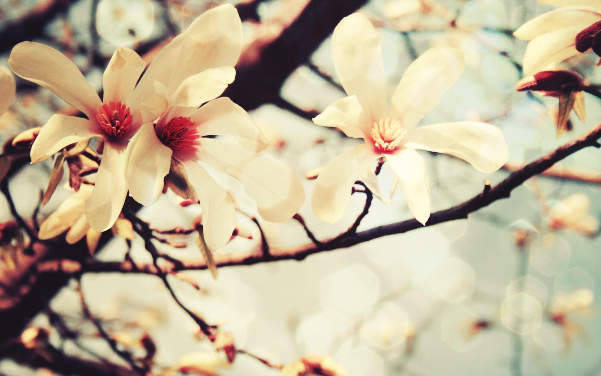 Spring Flower Wallpaper 73 Images
