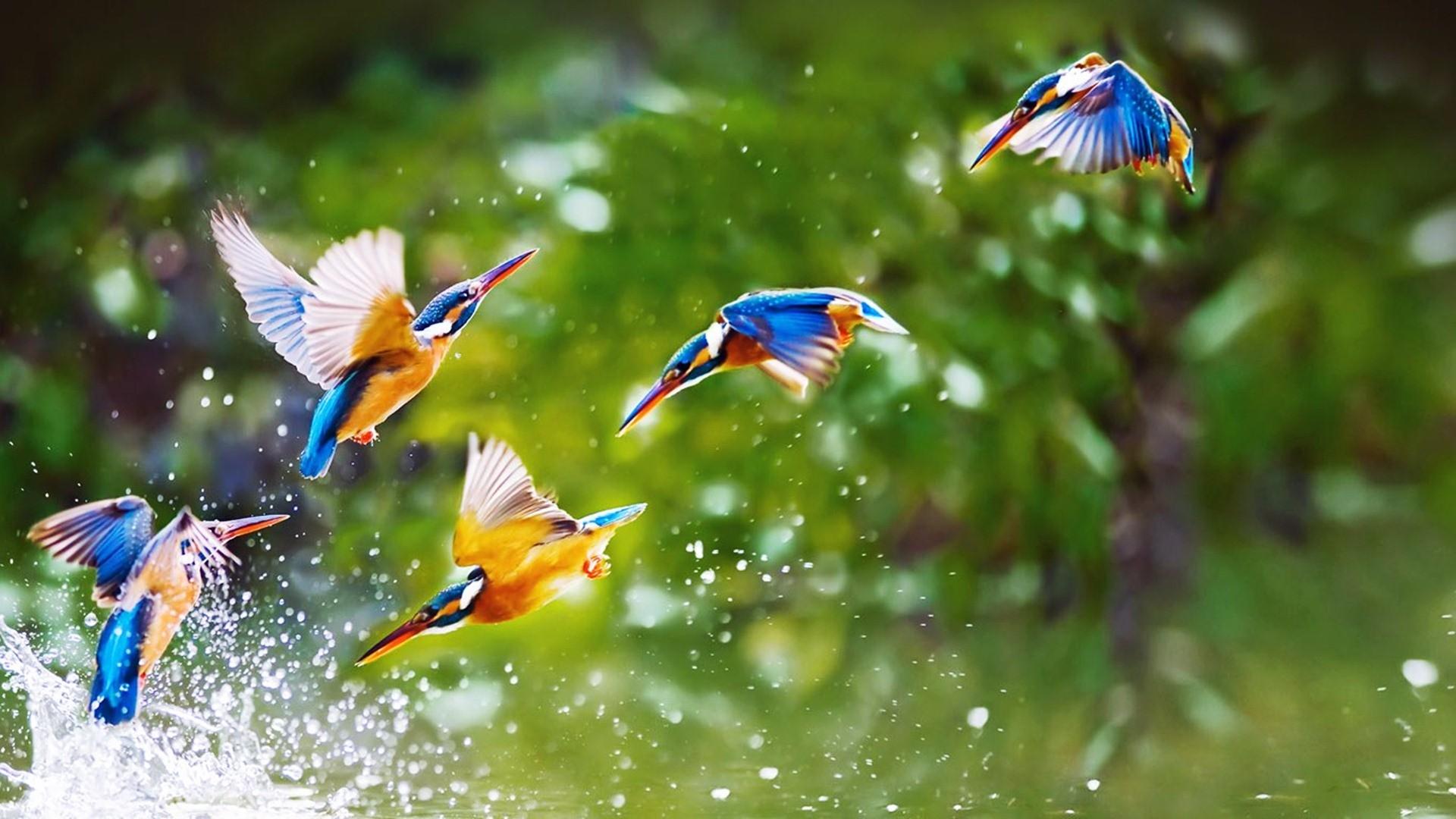 wallpaper birds (57+ images)