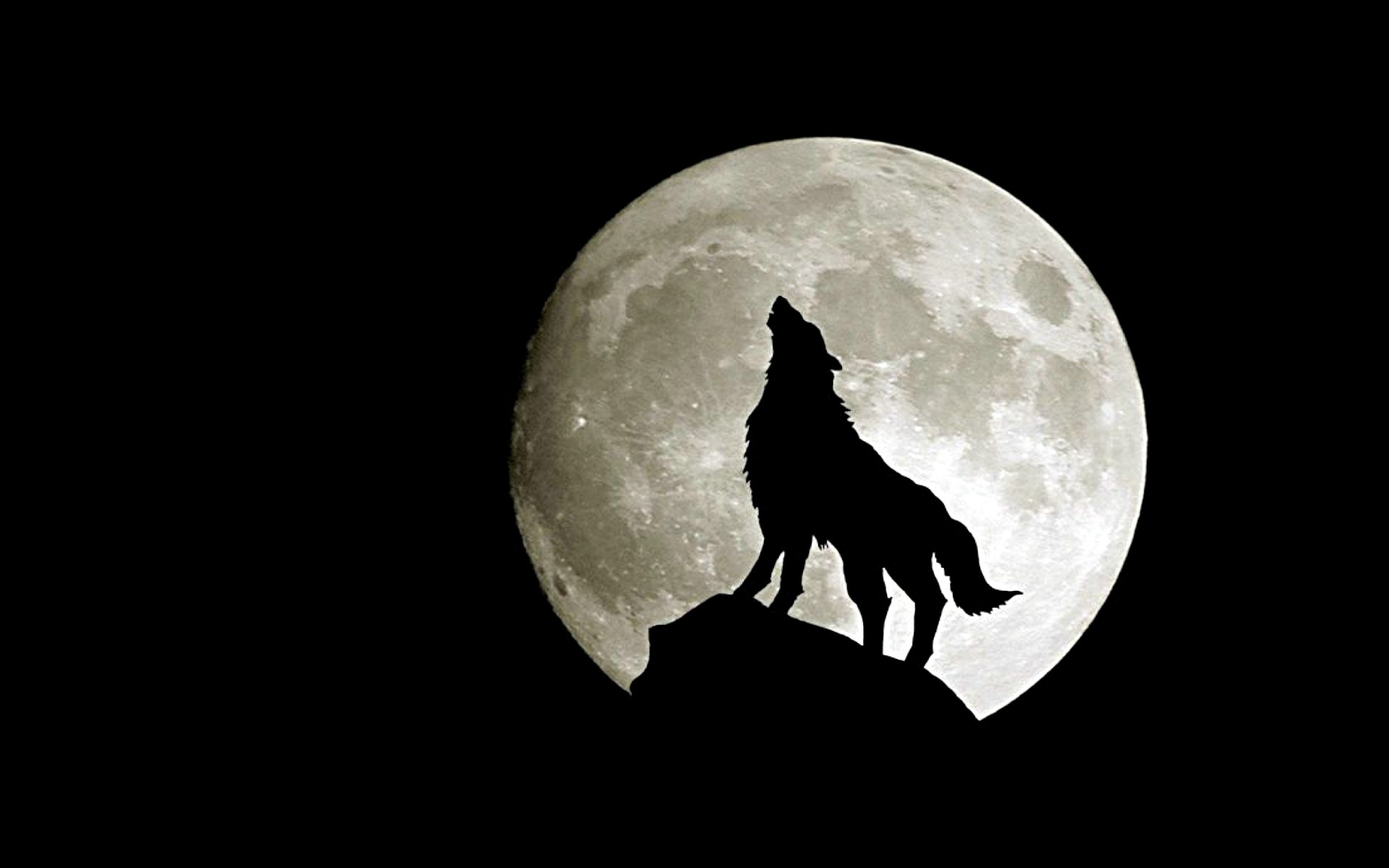 1920x1200 fantasia images lobo Moon HD wallpaper and background photos