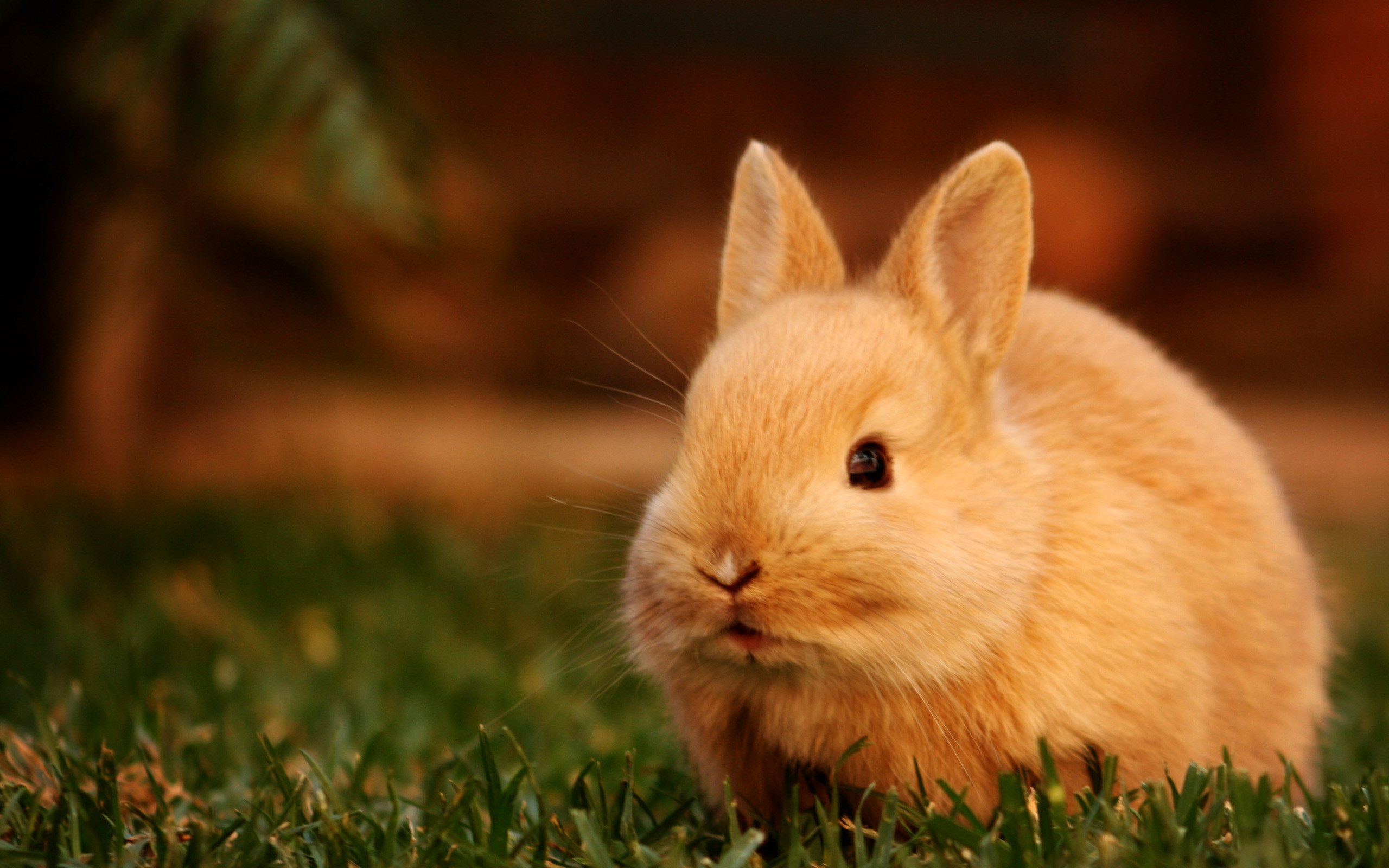 2560x1600 animal rabbit best desktop hd photos desktop wallpapers hd images background images mac desktop wallpapers