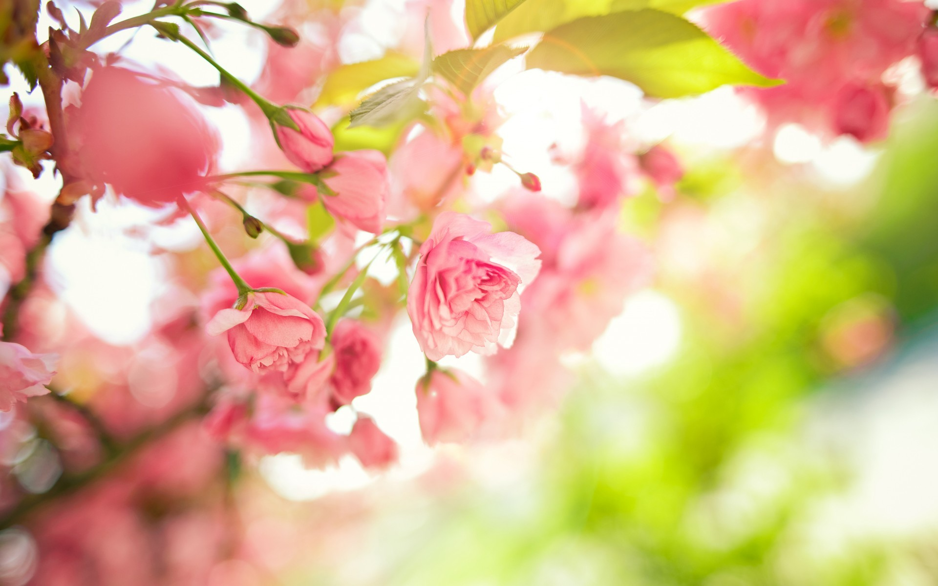 Spring flowers background 52 images 1920x1200 spring pink flowers size 1920x1200 62795 amazingpict mightylinksfo Gallery