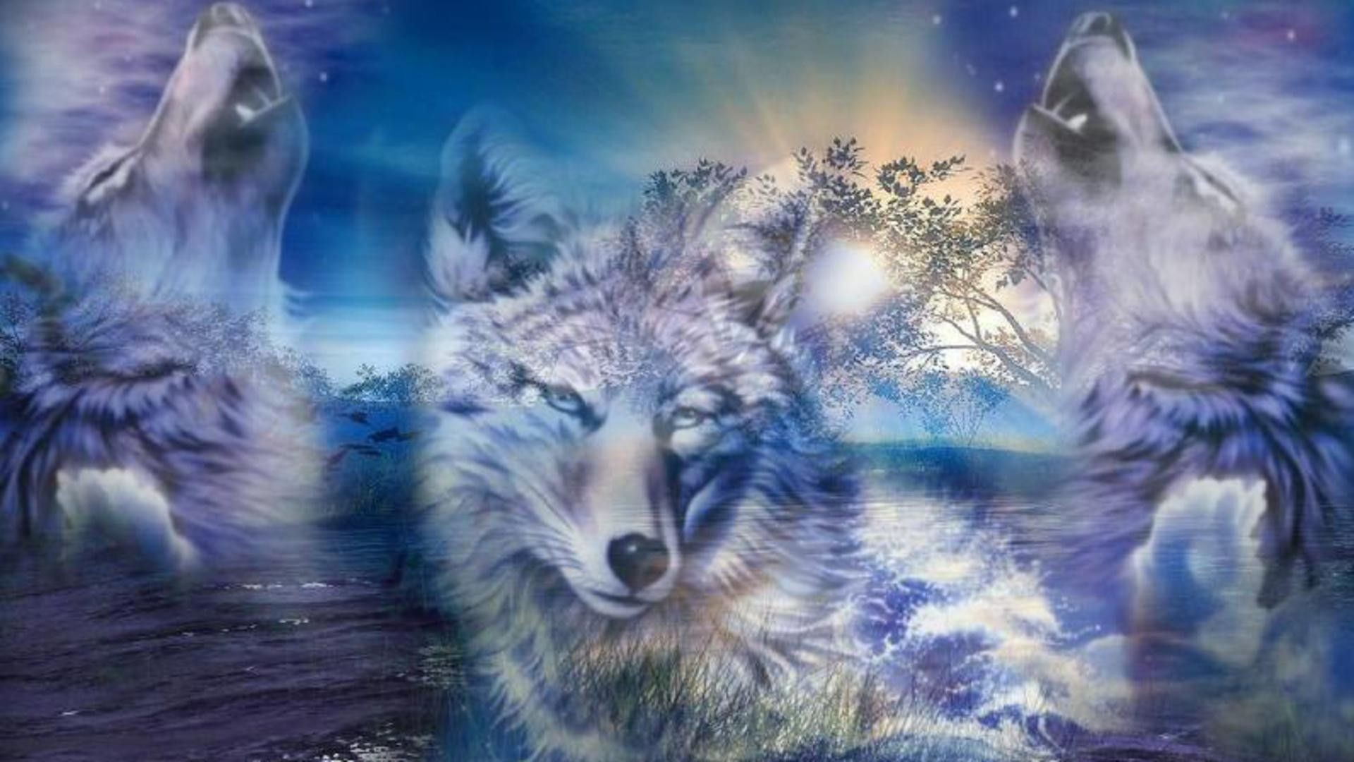 1920x1080 Wolf Pictures | All About Wolves Full HD 1080p Wolf Wallpapers HD, Desktop  ...