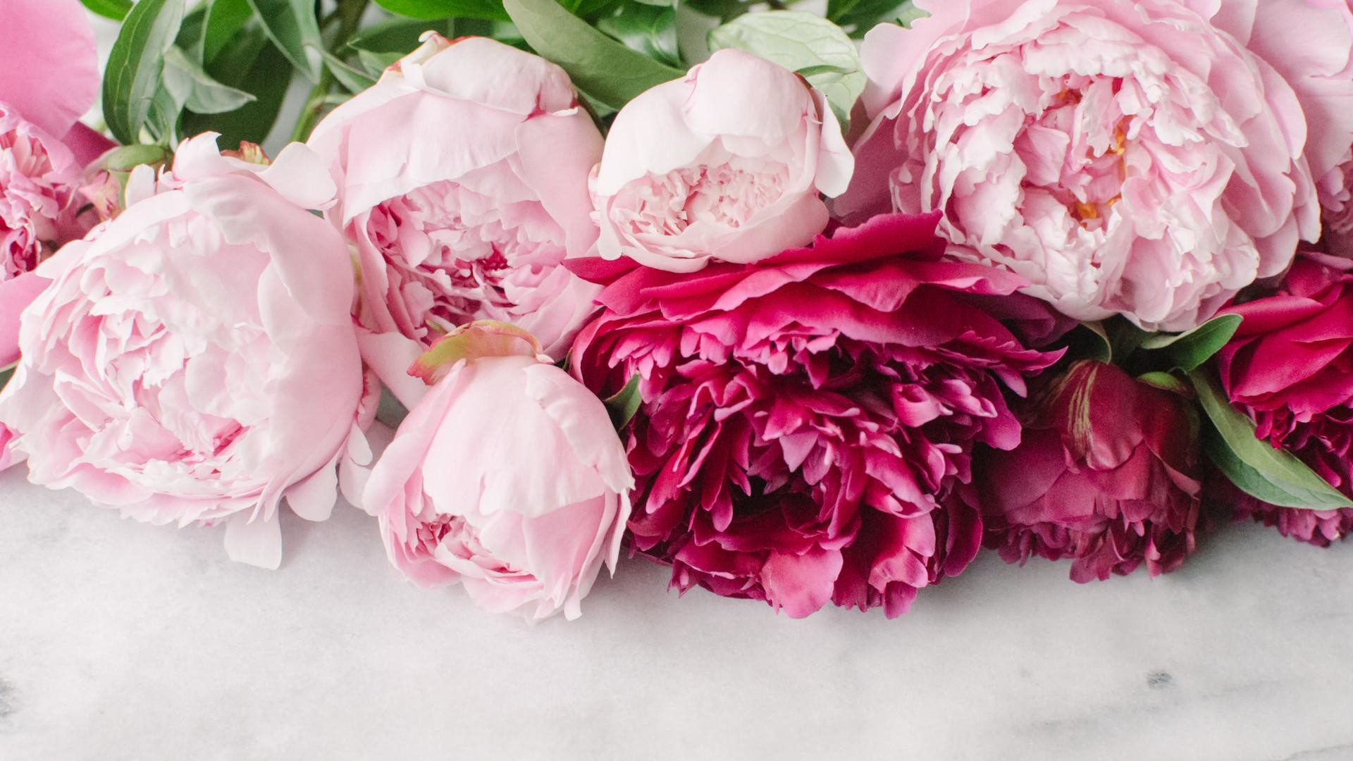 pink peonies wallpaper 46 images