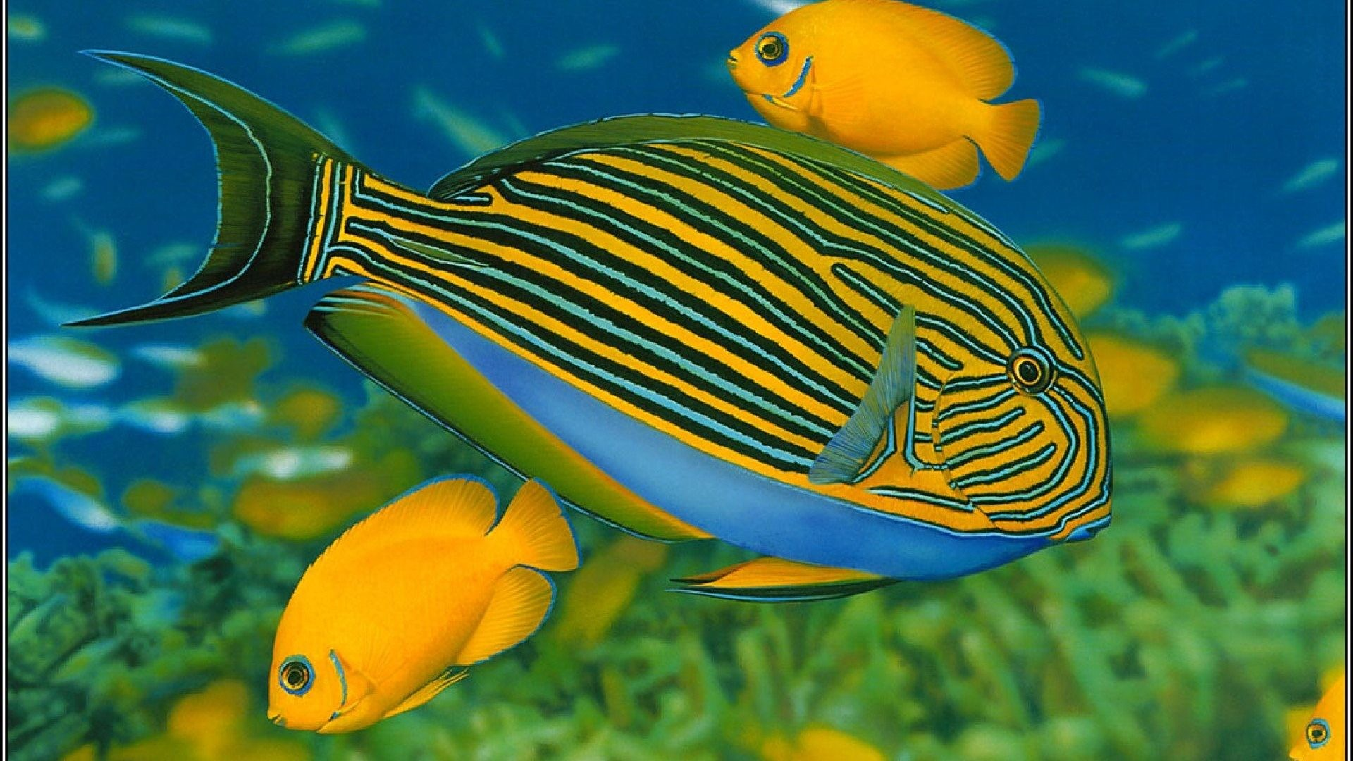 1920x1080 Fishes Sea Underwater Sealife Water Ocean Fish 3d Live Wallpaper Android