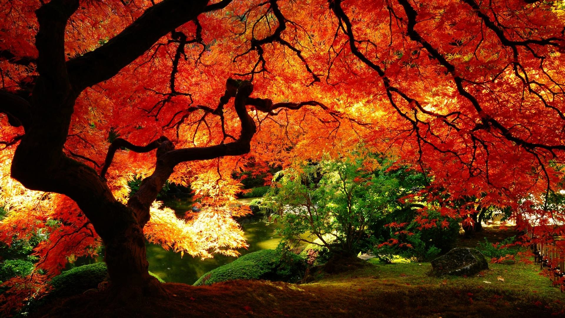 fall screen backgrounds 60 images