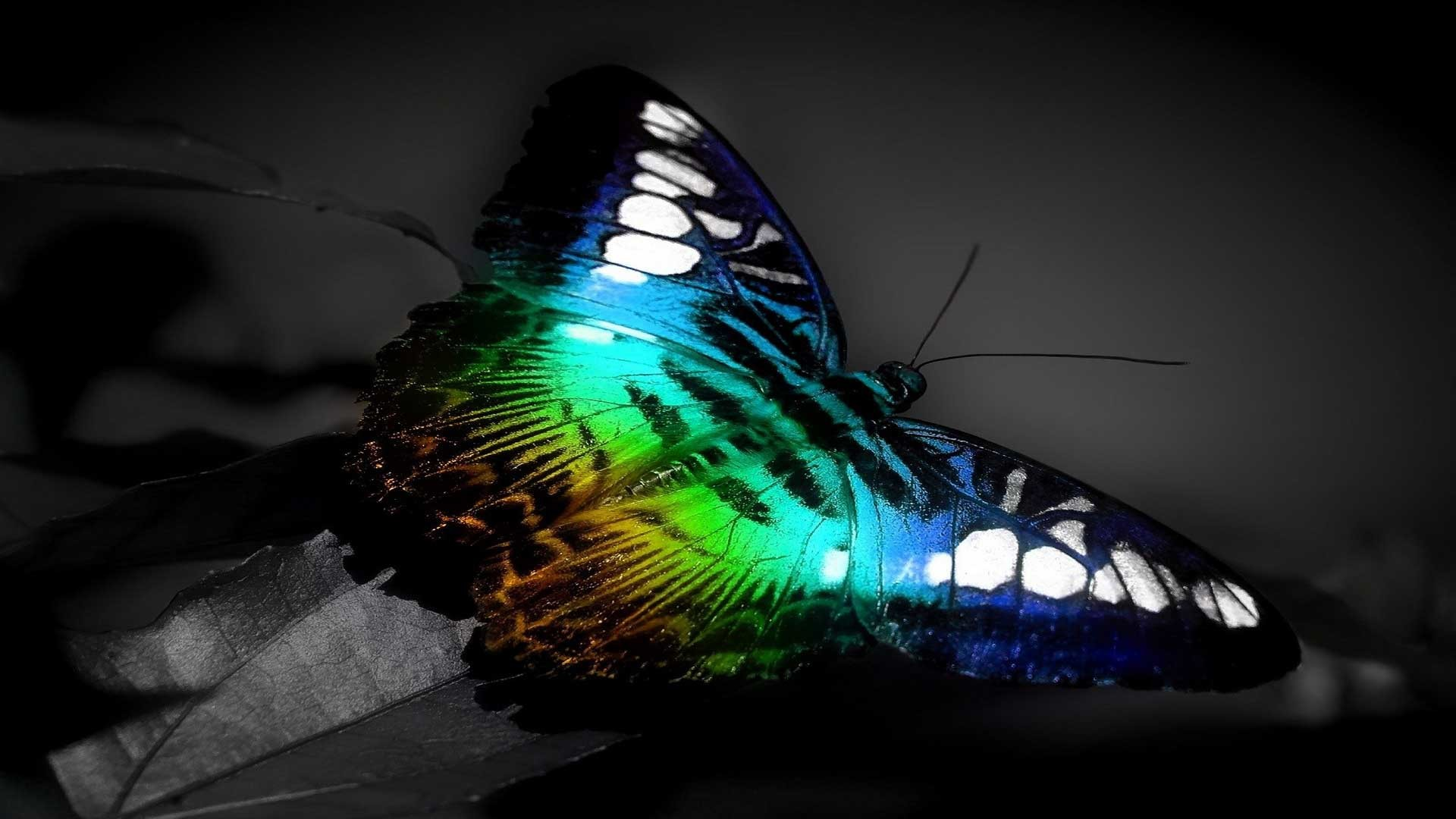 1920x1080 Colorful Butterfly 3D Full HD Wallpaper.