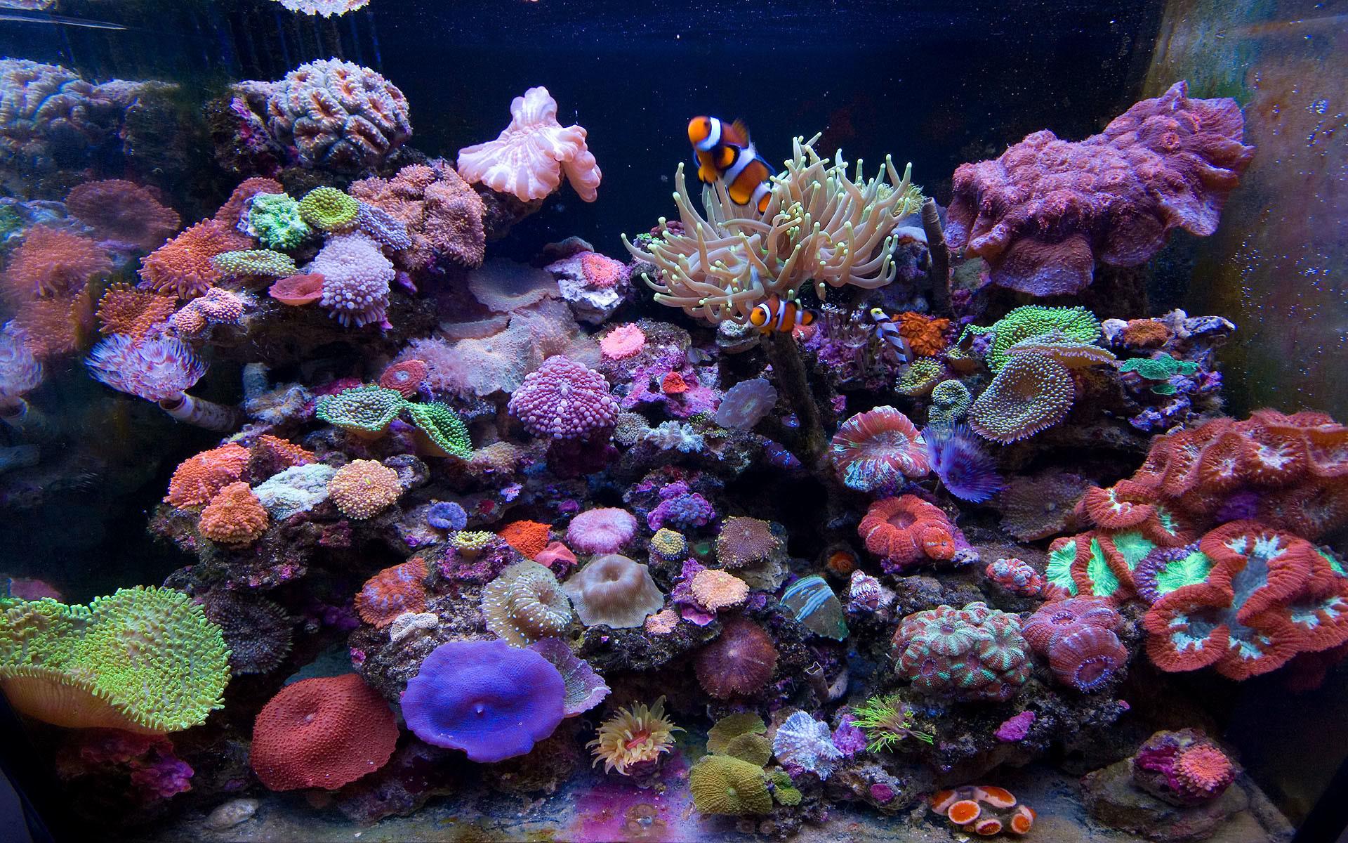 saltwater fish wallpaper