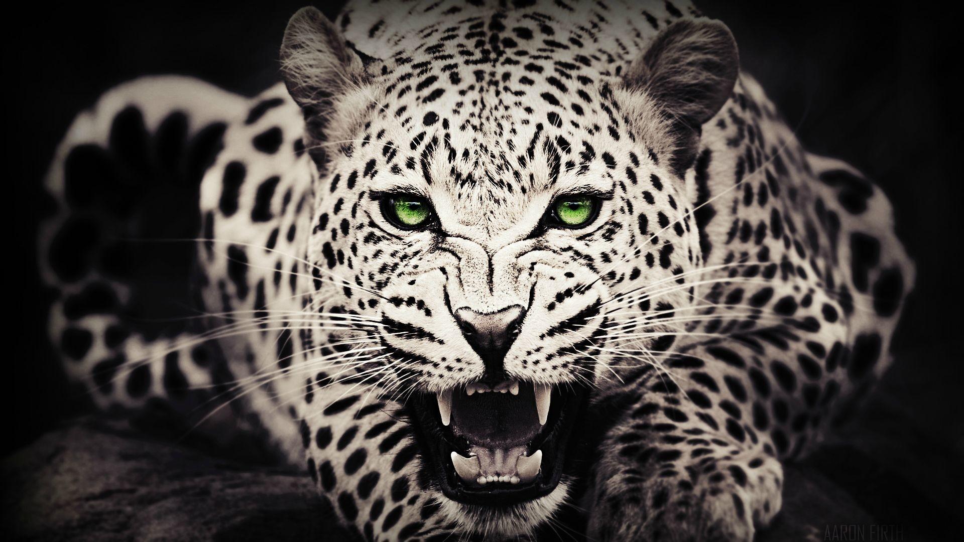 jaguar hd wallpapers 1080p free download