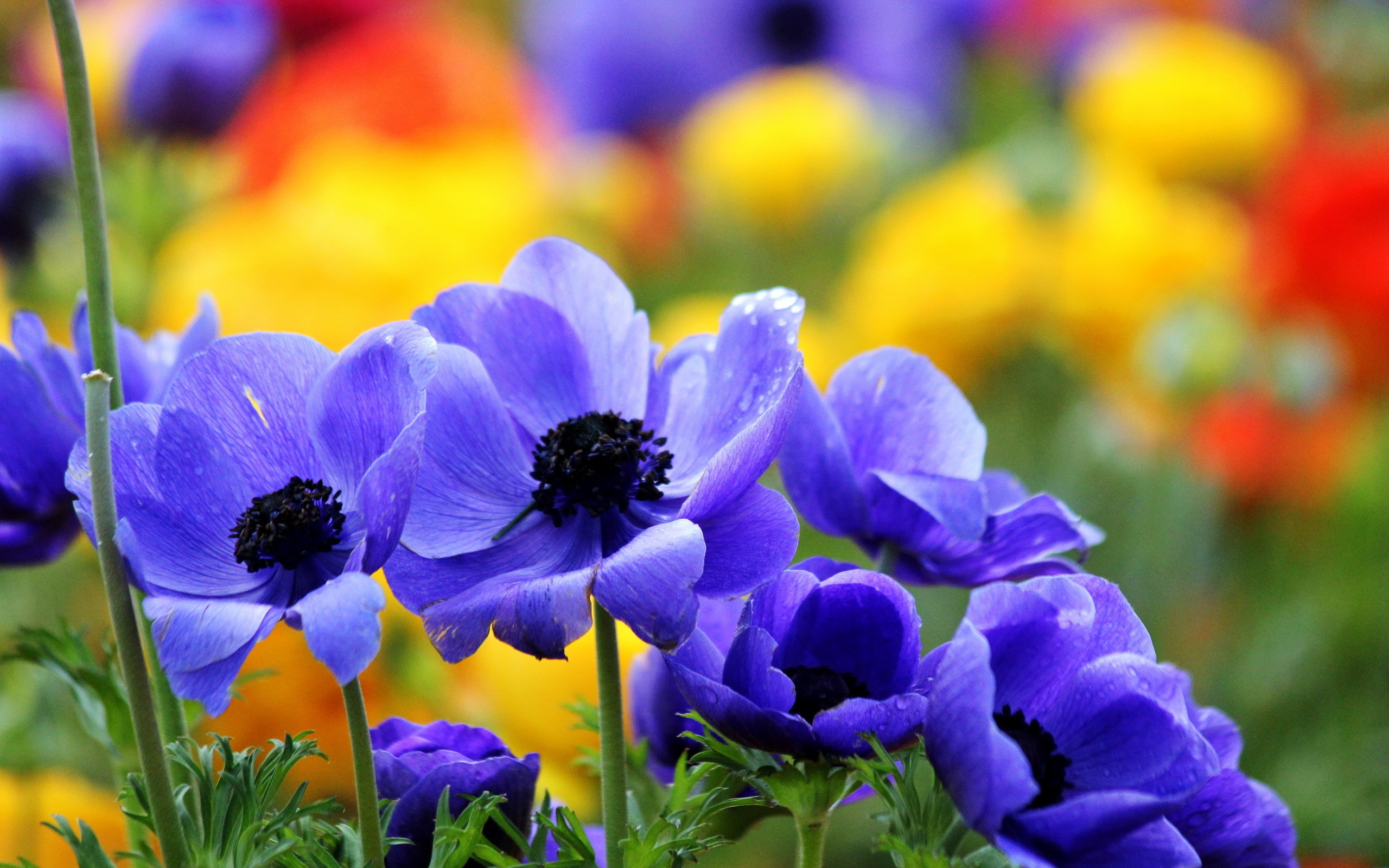 2560x1600 pretty flowers background #594089, flowers Photography Wallpapers