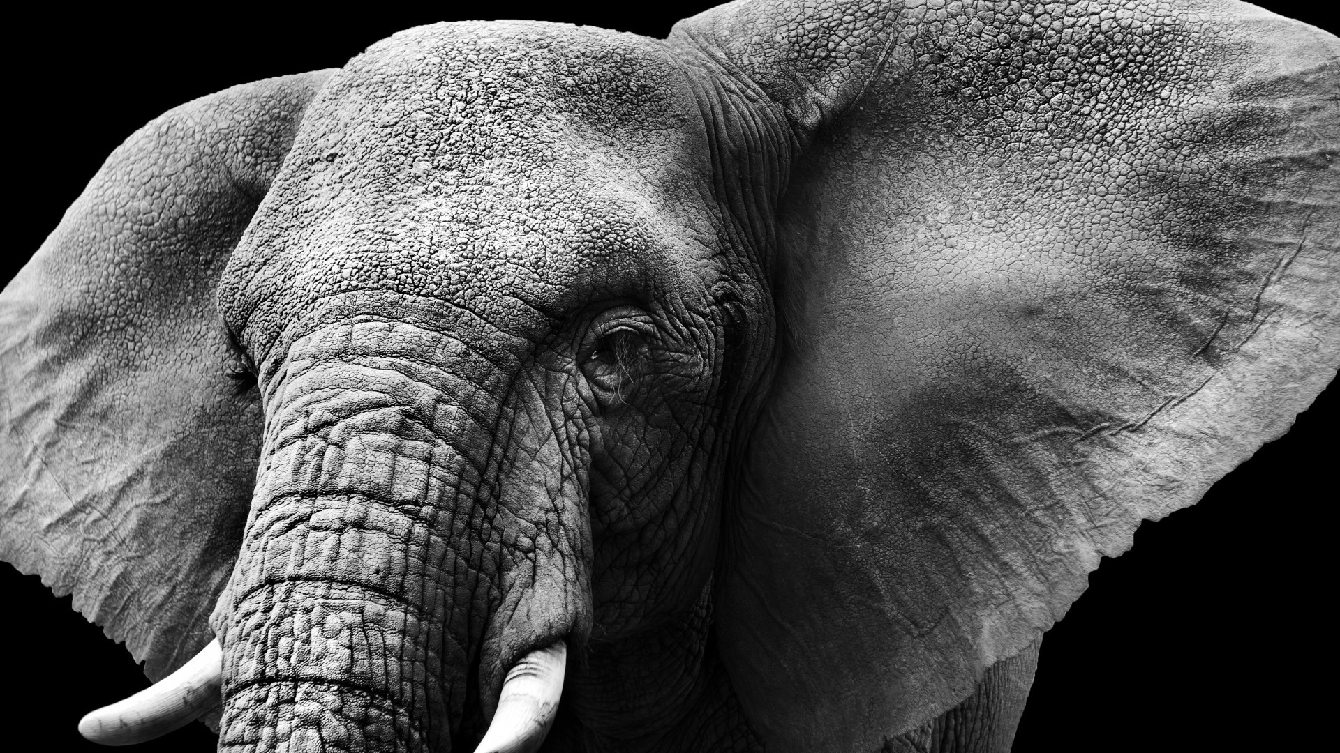 2048x1362 Baby Elephant Wallpaper Pictures 12785