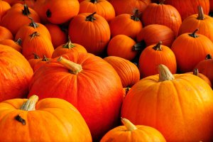cool Autumn Pumpkin Wallpaper 1920x1200 samsung galaxy