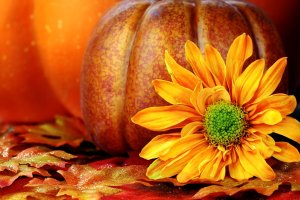 beautiful Fall Wallpaper Backgrounds With Pumpkins 1920x1200 for meizu