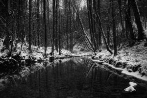 download free Black and White Snow Wallpaper 2560x1600 photo