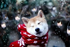 beautiful Cute Winter Animal Wallpaper 2560x1600