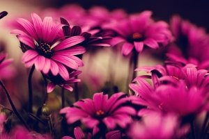 new Google Images Flowers Wallpaper 2560x1600 for android 4.0