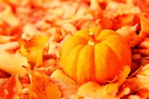 cool Fall Pumpkin Wallpaper and Screensavers 1920x1080 windows 7