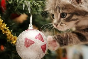 full size Christmas Kittens Wallpaper 2560x1600 for iphone 5