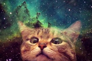 large Space Cat Wallpaper 1920x1200