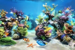 Aquarium Live Wallpaper Windows 10 1920x1080 for iphone 6