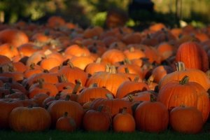 popular Fall Wallpapers With Pumpkins 3072x2048