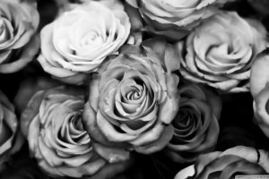 new Black and White Rose Wallpaper 1920x1080 xiaomi