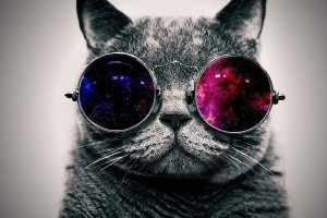 Cool Cat Wallpaper 1920x1200 for tablet