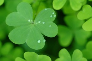 amazing St Patricks Day Wallpaper Backgrounds 1920x1200 for mobile