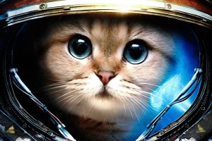 Space Cats HD Wallpaper 1920x1080 images