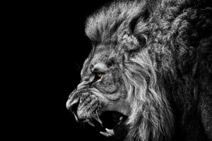 Roaring Lion Wallpaper 1920x1080 for meizu