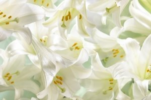 free download Easter Lilies Wallpaper 1920x1080